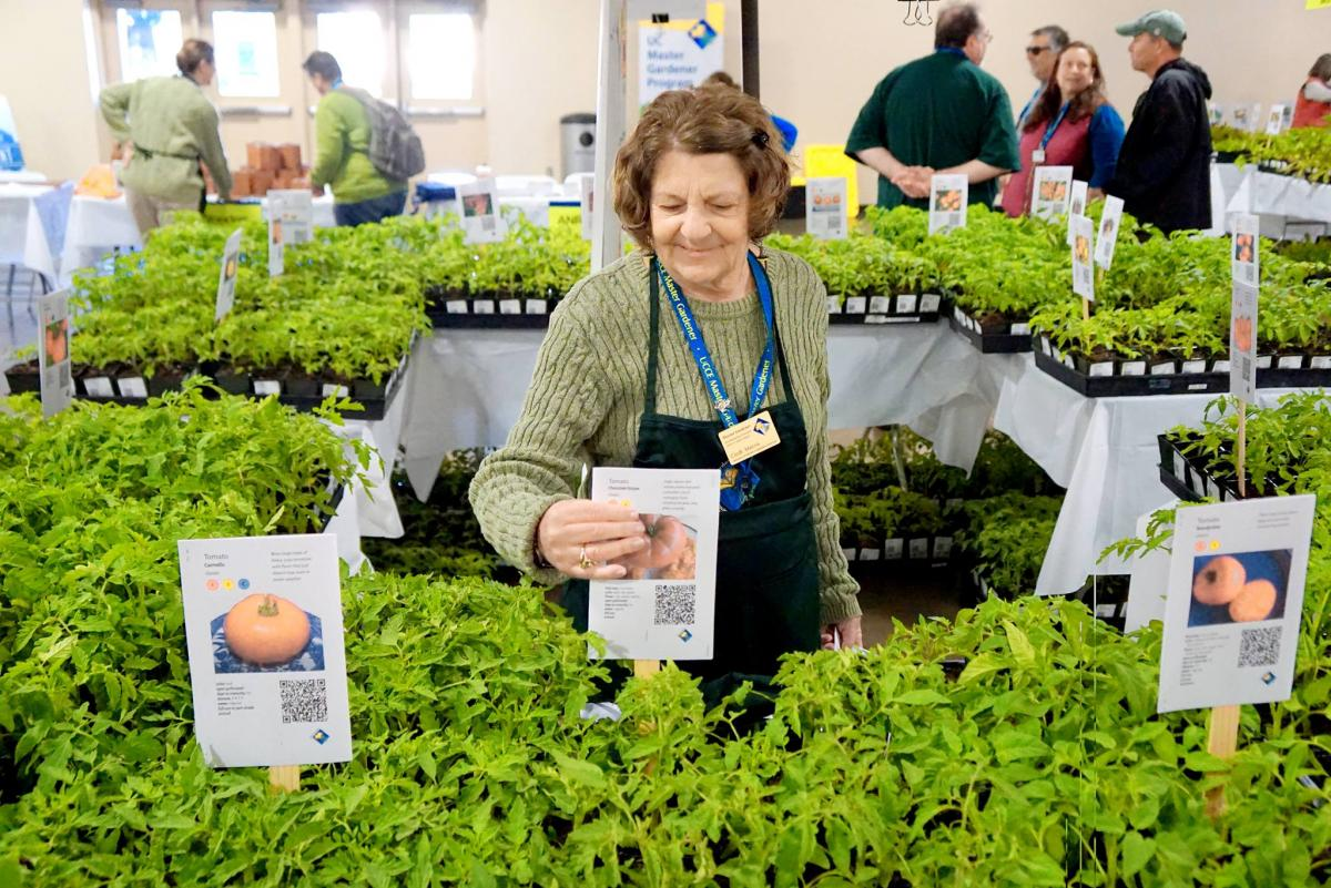 UC Master Gardeners are busy growing plants for this year's Spring Garden Market.