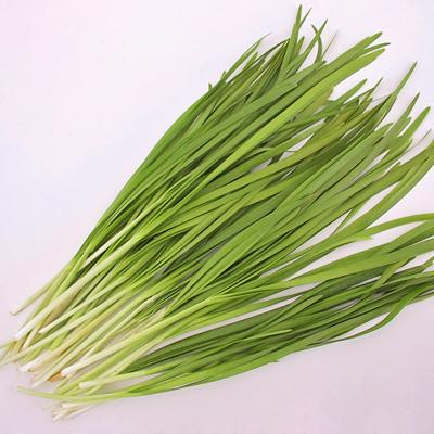 garlic chives with wide, flat, green leaves