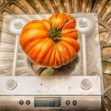 A single, large, orange-red striped, multi-lobed tomato on a kitchen scale weighing in at 13.5 oz.