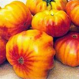 Virgina Sweets Beefsteak Tomato - prolific gold-red bicolor tomatoes