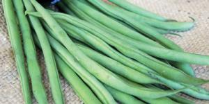 Photo of cluster of picked green beans, with a round black compass on top.