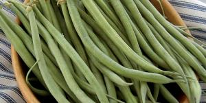 Photo of a bowl full of long thing green beans just picked.